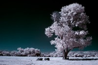Single infrared tree in middle of field